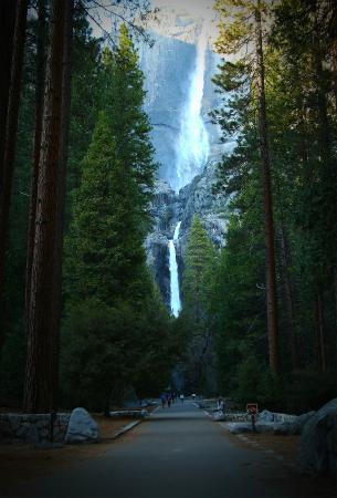 Yosemite Falls: Yosemite Waterfall by Roman Maksimov. Instagram: @customyzer
