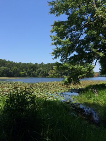 Daingerfield State Park: Water