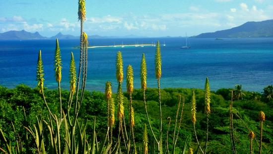 Seaclusion Suites: overlooking a protected bay, Aloe Vera flowers border the property gardens