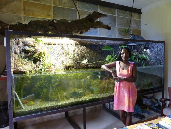 Blue Mango Lodge: Daisy and the amazing aquarium