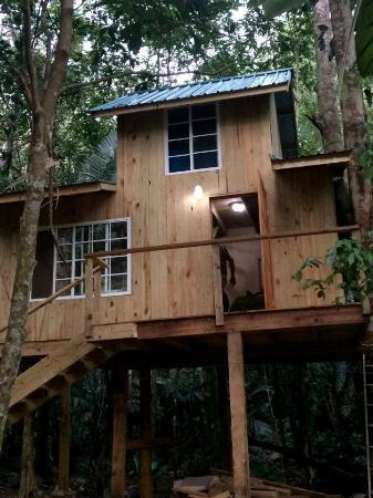 Blue Creek Rainforest Lodge: treehouse