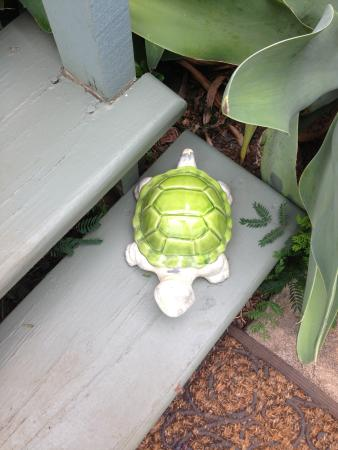 Spyglass Maui Rentals: Green Turtle Welcome