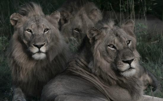 Kings Camp: three beautiful males