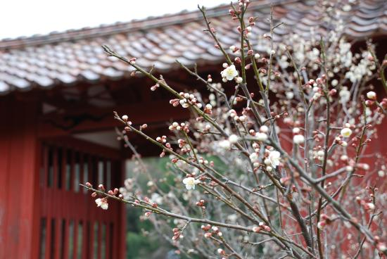 Kanzeonji Temple