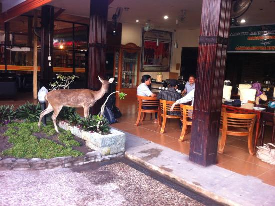 Bima, Indonesia: checking us out at meal time