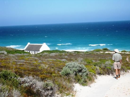 Koppie Alleen - Picture of De Hoop Nature Reserve ...
