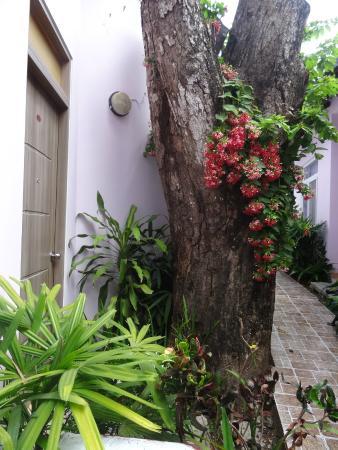 Shena Resort: Allée fleurie devant les chambres
