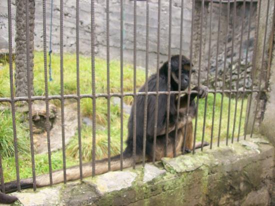 Zoologico de San Martin: Manos! Monkeys!