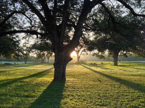 Castroville, TX: sunrise through the trees