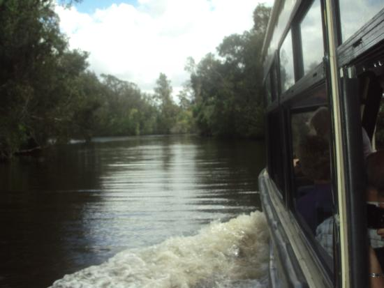 The Discovery Group - Day Tours: One of the many photos I took of the Noosa Everglades