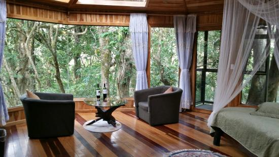 Hidden Canopy Treehouses Boutique Hotel Room & Room - Picture of Hidden Canopy Treehouses Boutique Hotel ...