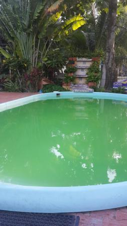 Piscina Para Ninos Con Agua Verde Picture Of Cocoplum Beach Hotel
