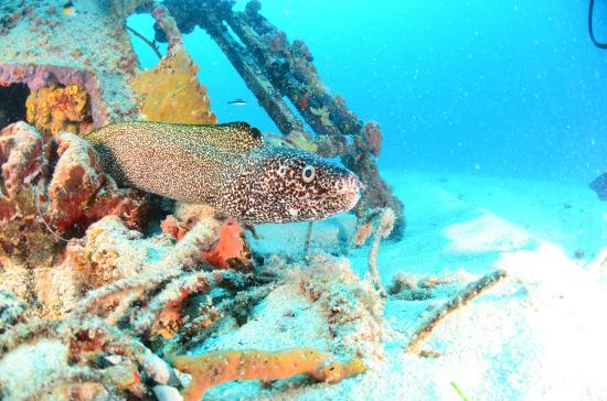Diving off Simpson Bay St Maarten