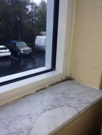 Quality Inn: Mold is a regular guest in this hotel