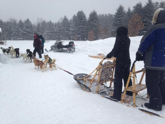 Shemhadar Dog Sled Adventures