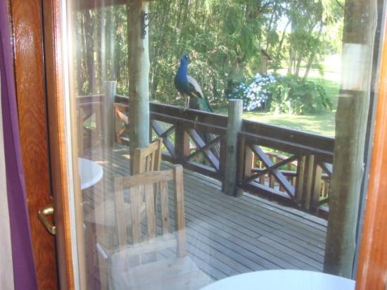 Rumbo 90 Delta Lodge & Spa: Balcon de la habitacion