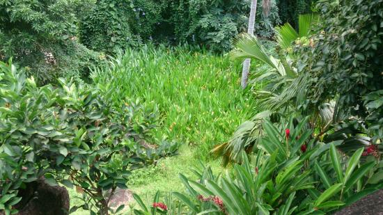 Daniella's Bungalows: Behind the area