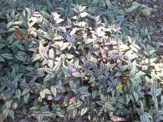 Foto de jard n bot nico guillermo pi eres turbaco rea for 6 plantas ornamentales