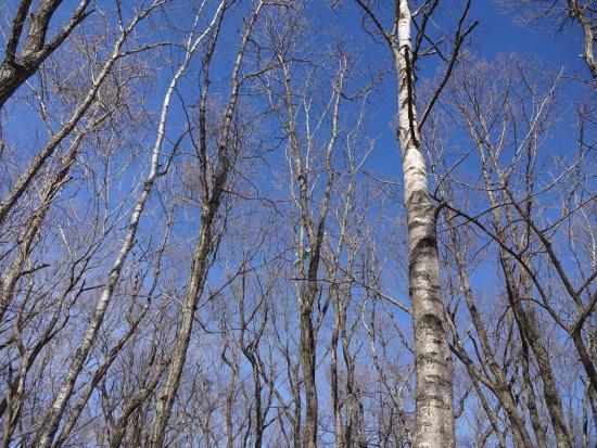 Lake Utonai : 湿地帯の林