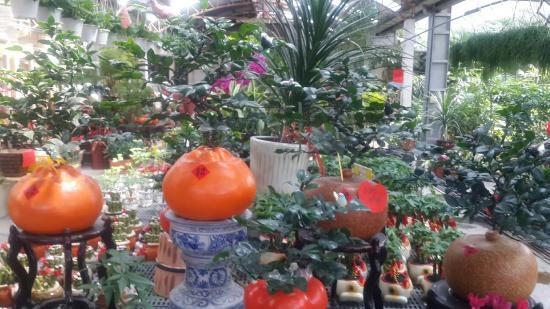 Zhongxin Sprout Farm