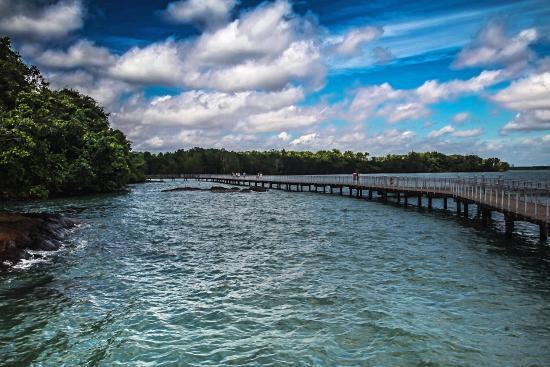 Pulau Ubin, Σιγκαπούρη: The Mangrove walk