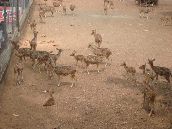 Hill Palace of Tripunithura: Deer Park