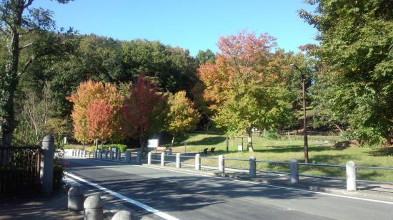 Oyamadairi Park: 中のドックラン(秋です)