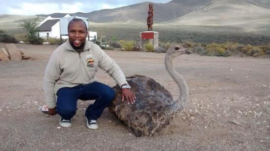 African Game Lodge: Saidi the Ostrich