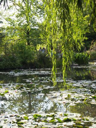 I giardini ed il laghetto foto di casa e giardini di for Laghetto i giardini