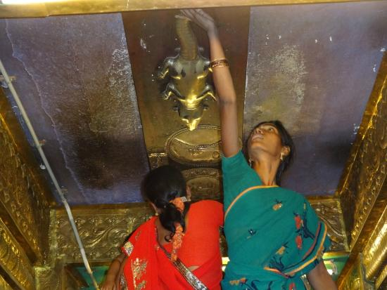 Image result for lizard idol at kanchi varadaraja perumal temple