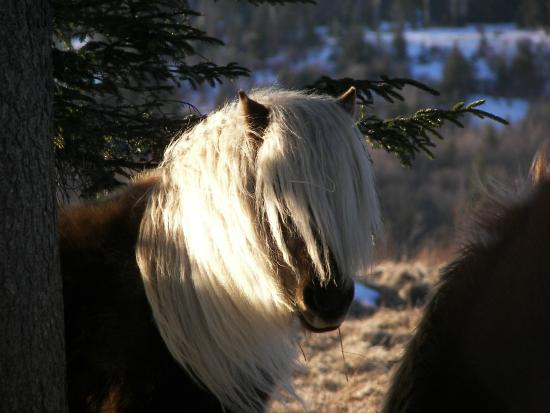 Grayson Highlands State Park : ponies of the highlands