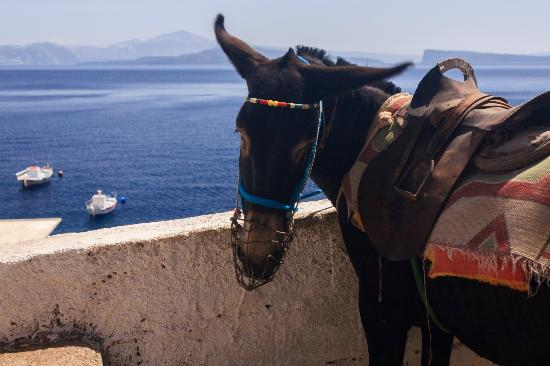 Santorini Best Tours - Omega Travel