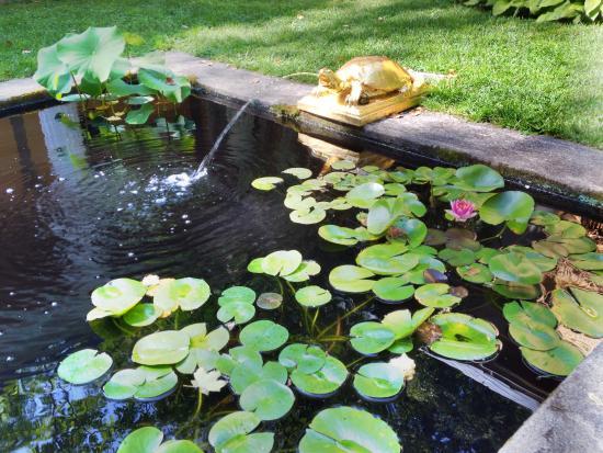 Cornish, NH: Koi pond at St Gautend
