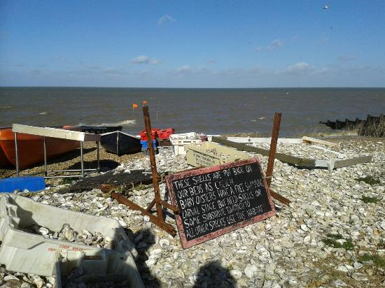 Tankerton Slopes: Oysters shells for all