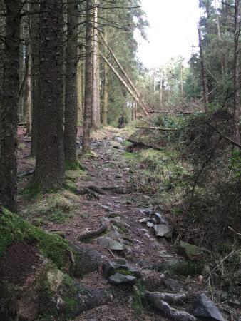Castlewellan, UK: Drumkeeragh Forest