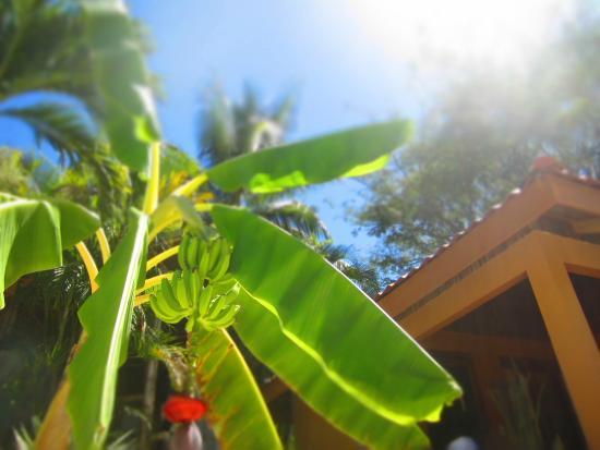 Hotel Ritmo Tropical: Sunny, tropical paradise!