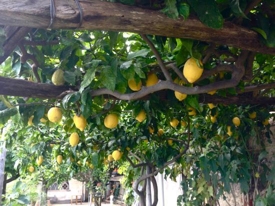 Casa Soriano: Lemon Trees on the Terrace