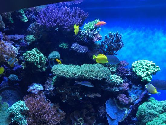 Zona De Ondas Picture Of Monterey Bay Aquarium Monterey