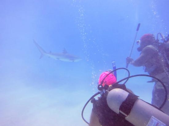Long Island: Shark Dive