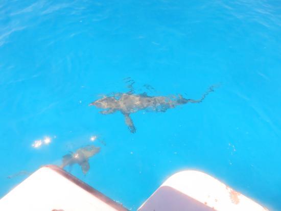 Stella Maris Resort Club Scuba Diving : ums Boot herum Riffhaie