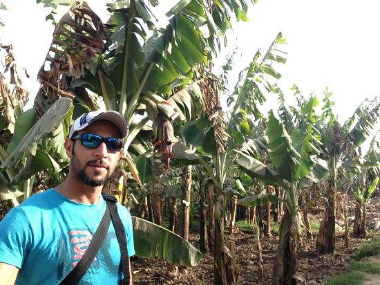 Banana Island (Gezira el-Mozh): The farm