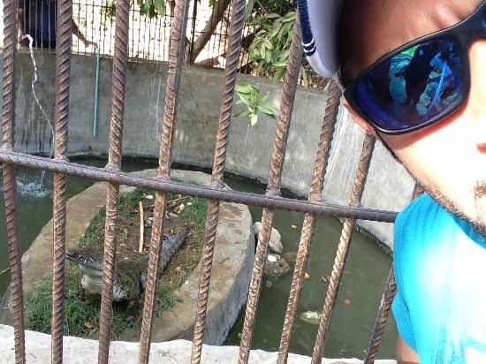 Banana Island (Gezira el-Mozh): The Crocodile.