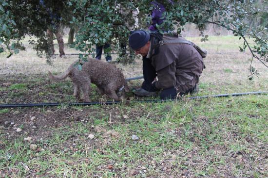 Gite Du Val Des Nymphes: Week-end truffe
