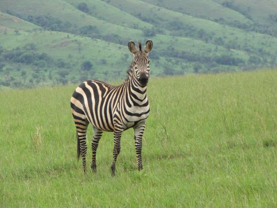 Primate Safaris: Akagera National Park, Rwanda
