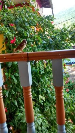 Pousada Pedacinho de Ceu : Lugar lindo café da manhã ao lado da natureza... Com pássaros passeando lado a lado... Perfeit