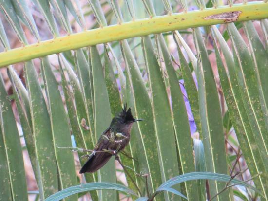 Hotel L'Esplanade: Hummoing bird in grounds