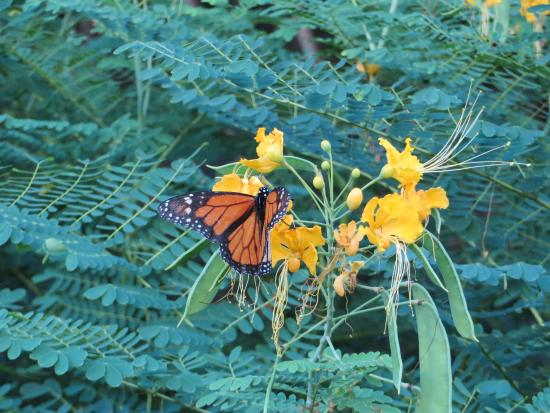 Hotel L'Esplanade: Butterfly in grounds