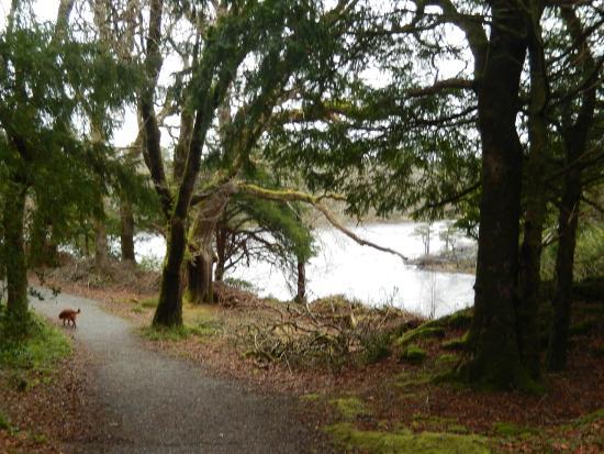Killarney Guided Walks : Killarney National Park