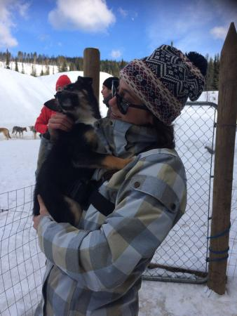 Mountain Man Dog Sled Adventures: Interaction with the pup's 🐶