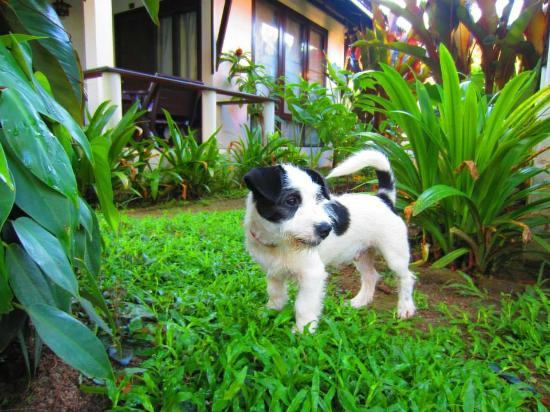 Baan Chaba Bungalows: Soda, a puppy roaming the beach and hotels